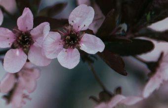 Flowers Branch Bloom Spring 1080x2460 340x220