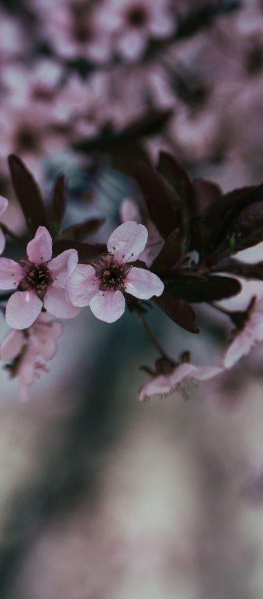 Flowers Branch Bloom Spring 1080x2460 380x866