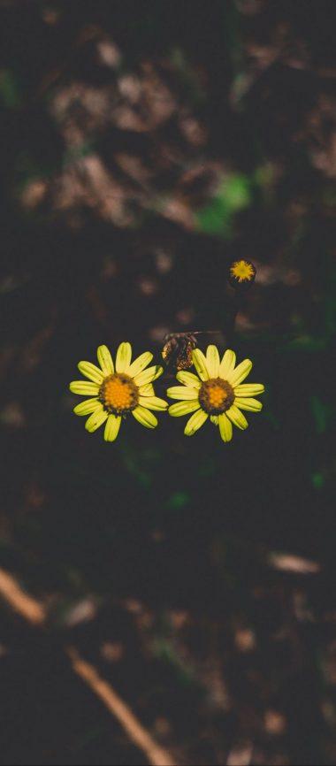Flowers Couple Stem Dark 1080x2460 380x866