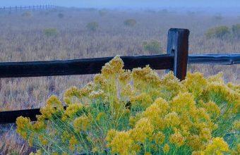Flowers Grass Field Fence 1080x2460 340x220