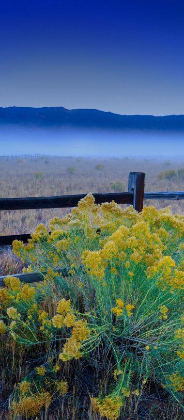 Flowers Grass Field Fence 1080x2460 380x866