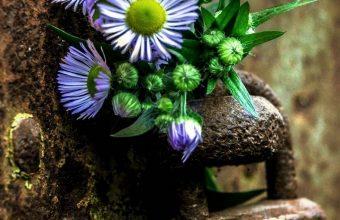 Flowers Lock Rust 1080x2460 340x220