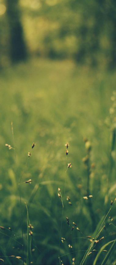 Grass Blur Field 1080x2460 380x866