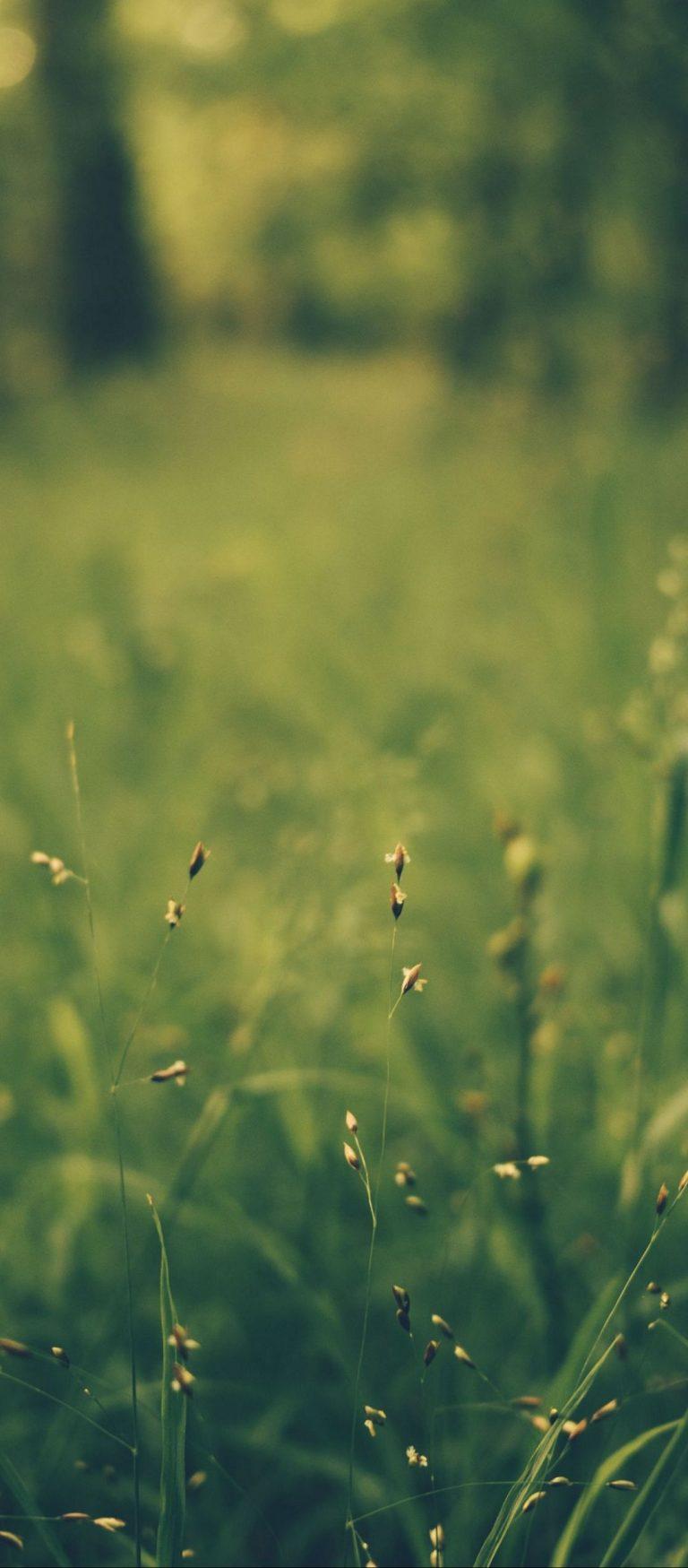 Grass Blur Field 1080x2460 768x1749
