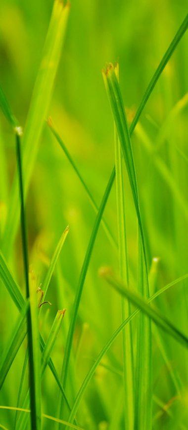 Grass Summer Nature Close Up 1080x2460 380x866