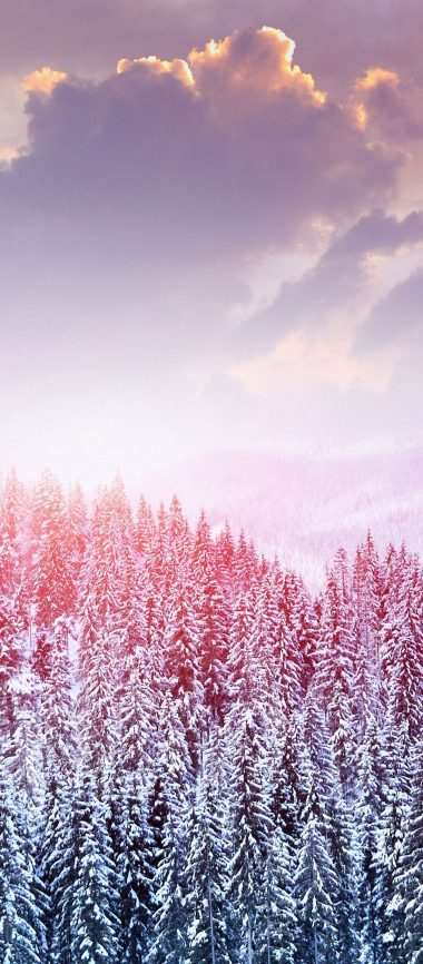 Landscape Winter Snow Trees Mountains 1080x2460 380x866