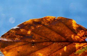 Leaf Autumn Fallen Dry Water Liquid 1080x2460 340x220