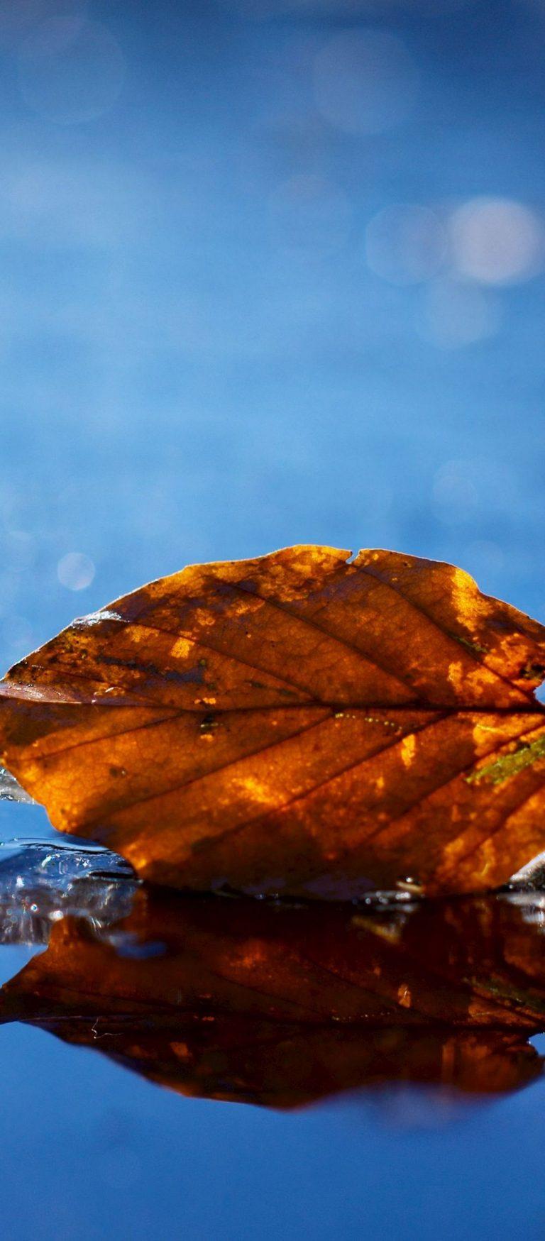 Leaf Autumn Fallen Dry Water Liquid 1080x2460 768x1749