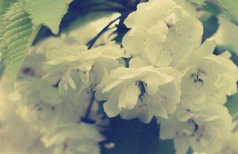 Macro Flowers White Branch 1080x2460 340x220