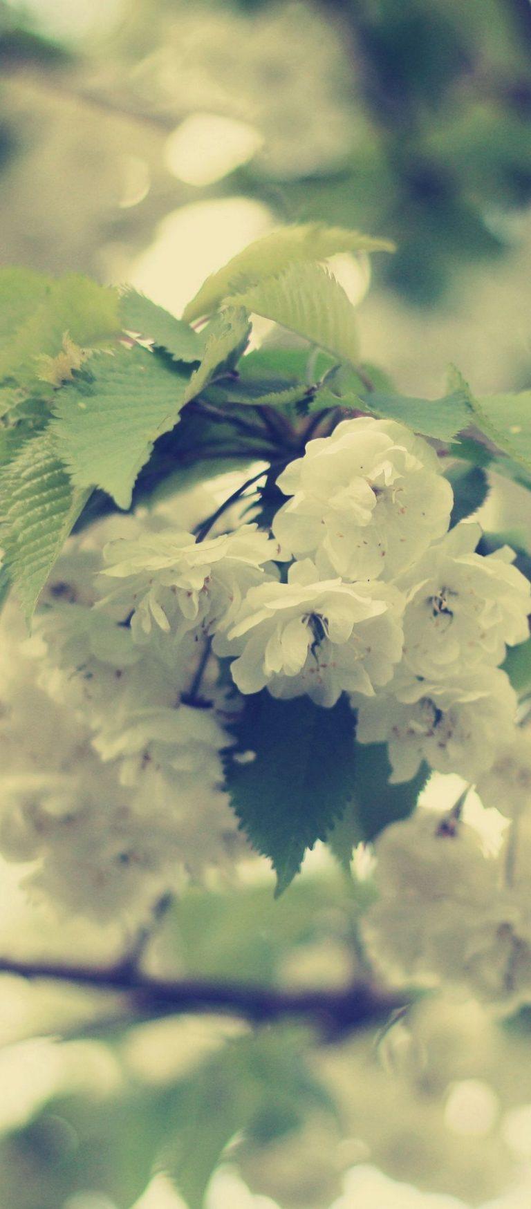 Macro Flowers White Branch 1080x2460 768x1749