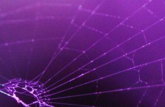 Macro Spider Purple 1080x2460 340x220