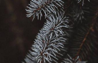Macro Spruce Branches 1080x2460 340x220