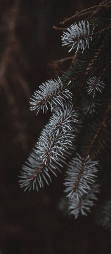Macro Spruce Branches 1080x2460 380x866