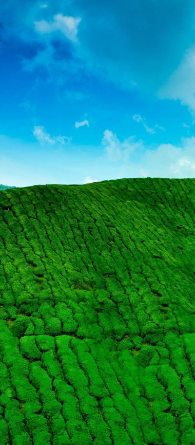 Mountains Tea Plantations Green 1080x2460 380x866