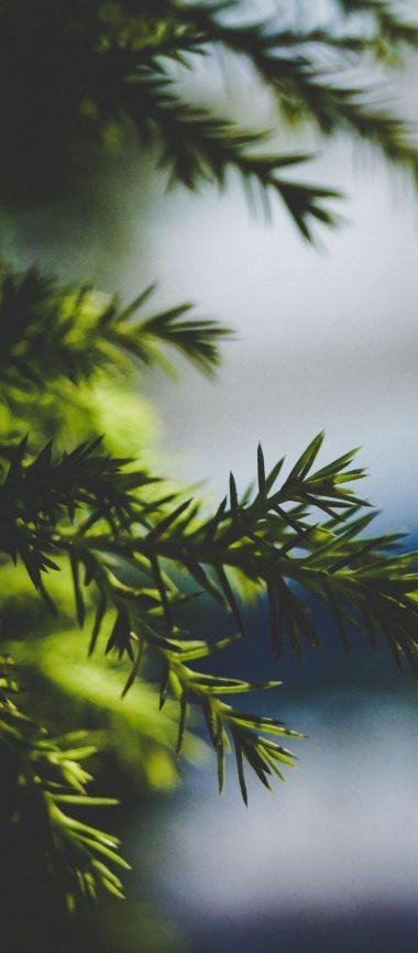 Needles Spruce Branch Blur 1080x2460 380x866