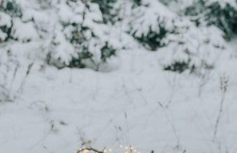 Picnic Comfort Snow 1080x2460 340x220