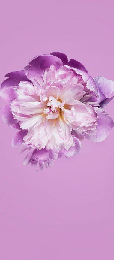 Pink Petals Flower 1080x2460 380x866