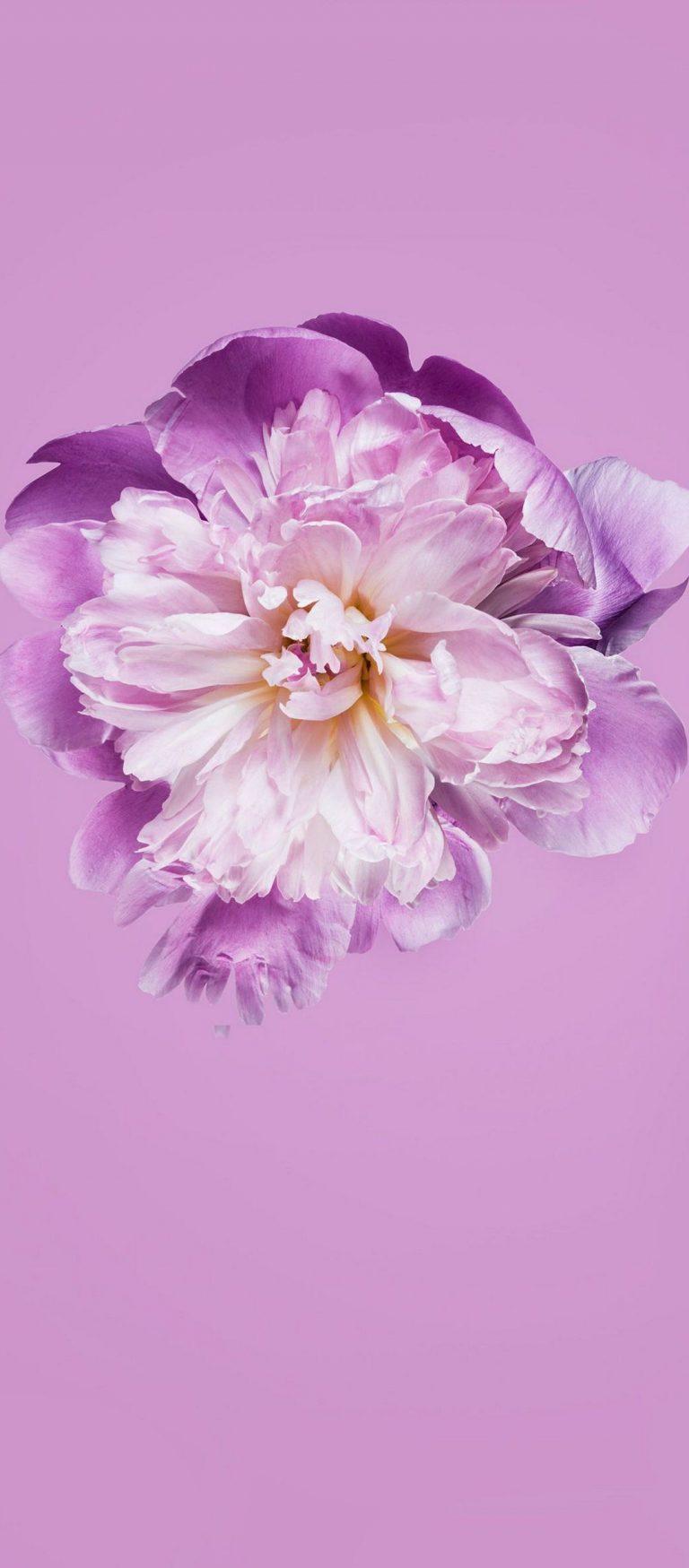 Pink Petals Flower 1080x2460 768x1749
