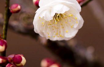 Plant Flower Blossom Branch Spring 1080x2460 340x220