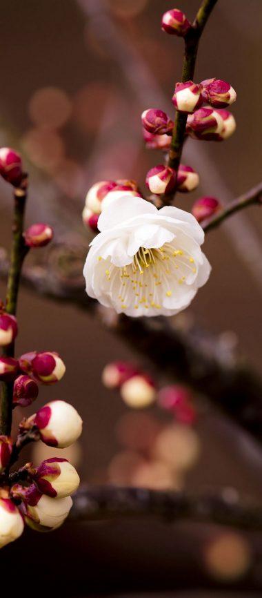 Plant Flower Blossom Branch Spring 1080x2460 380x866