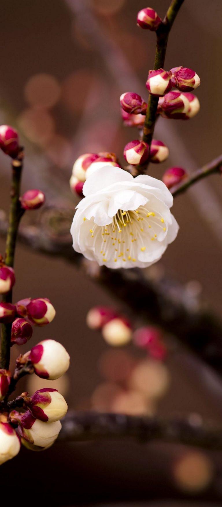 Plant Flower Blossom Branch Spring 1080x2460 768x1749