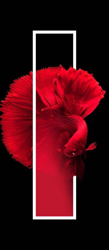 Red Fish Black Background Minimal 1080x2460 380x866
