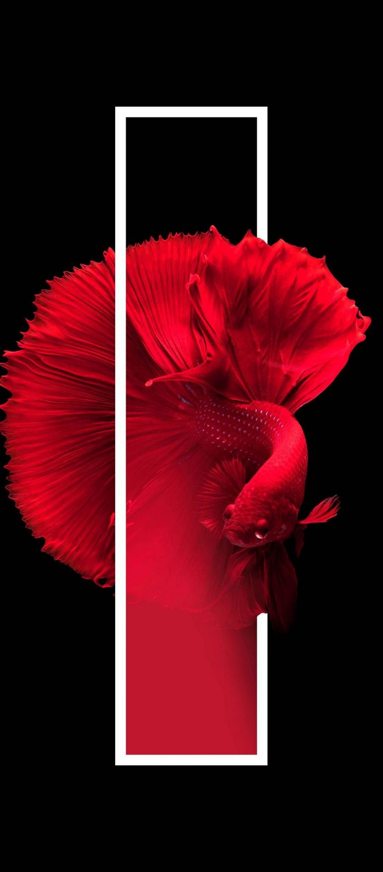 Red Fish Black Background Minimal 1080x2460 768x1749