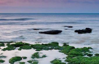 Reefs Moss Sea Rain Algae 1080x2460 340x220