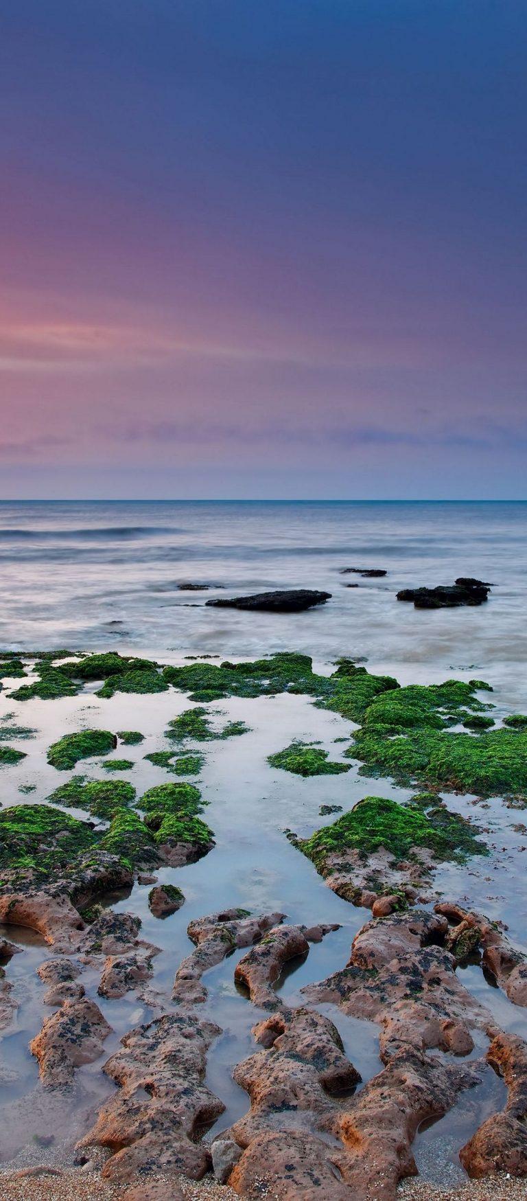 Reefs Moss Sea Rain Algae 1080x2460 768x1749