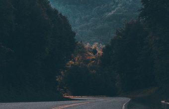 Road Marking Turn Trees 1080x2460 340x220