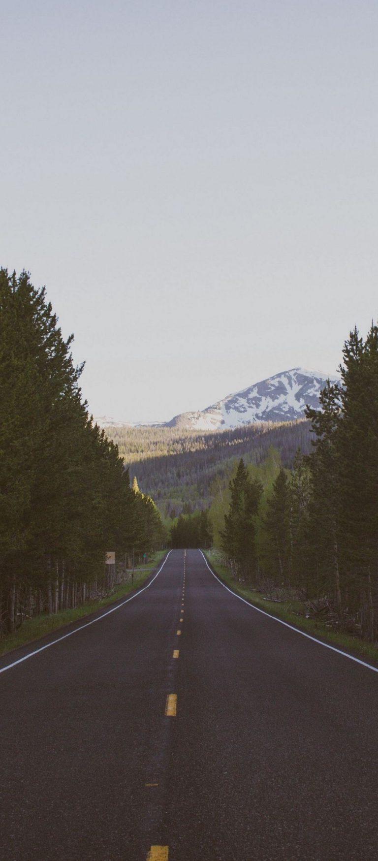 Road Trees Marking 1080x2460 768x1749