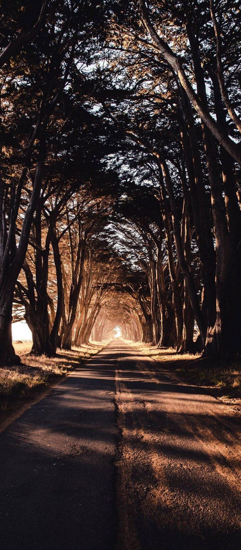 Road Trees Shadow 1080x2460 768x1749