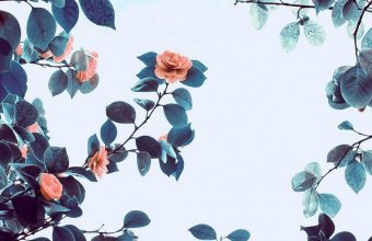 Roses Flowers Trees Branches 1080x2460 340x220