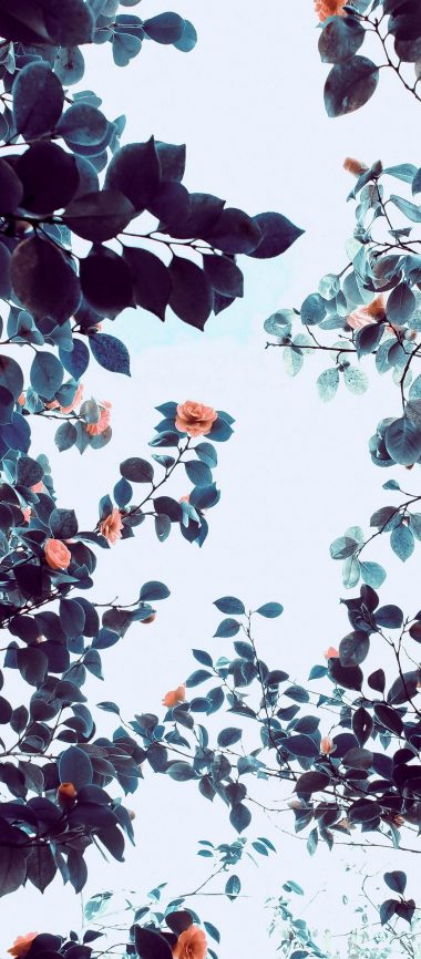 Roses Flowers Trees Branches 1080x2460 380x866