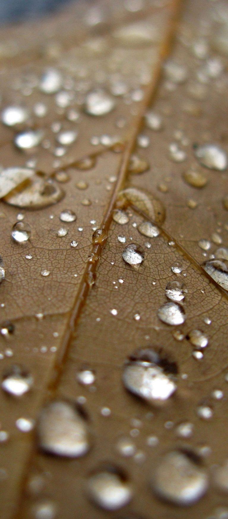 Sheet Drop Close Up Brown 1080x2460 768x1749