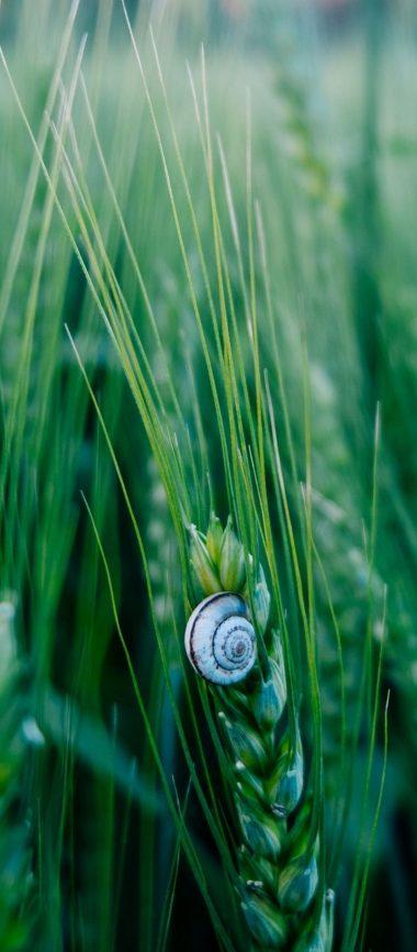 Snail Macro Shell 1080x2460 380x866