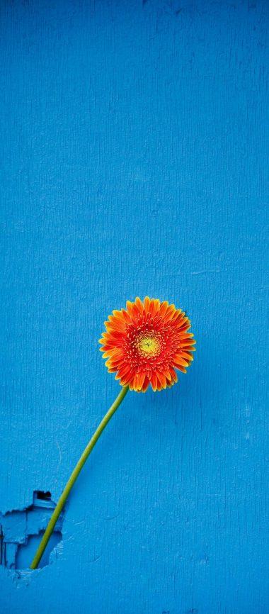 Texture Back Orange Flower 1080x2460 380x866