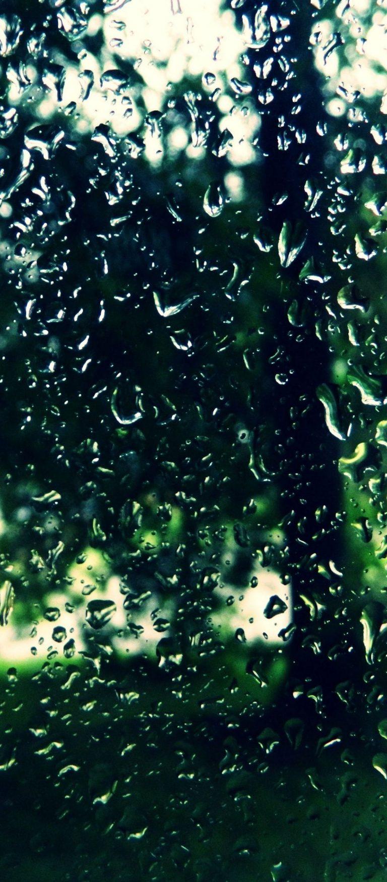 Trees Drops Glass 1080x2460 768x1749