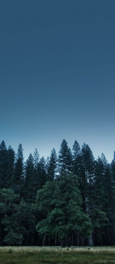 Trees Forest Mountains Usa California 1080x2460 380x866