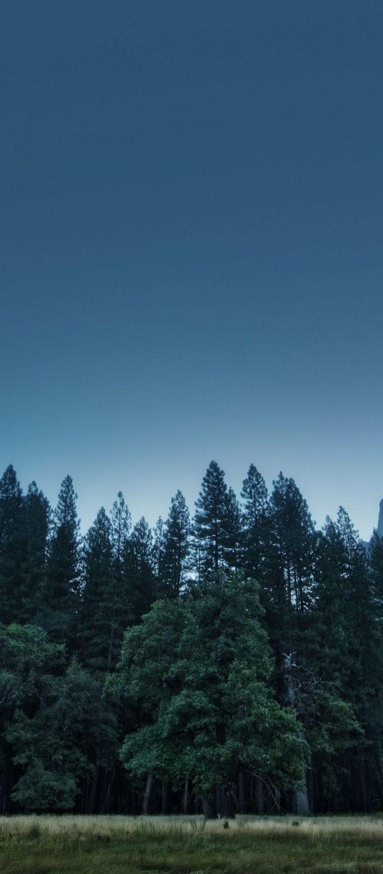 Trees Forest Mountains Usa California 1080x2460 768x1749