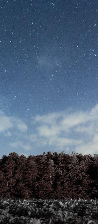 Trees Sky Stars Clouds 1080x2460 380x866