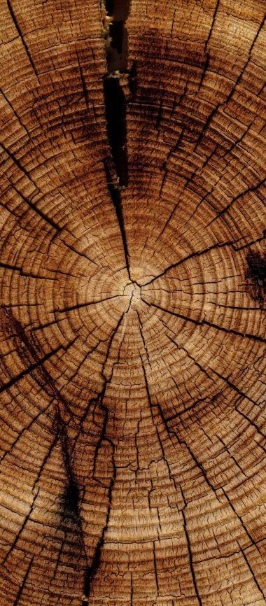 Trunk Tree Texture 1080x2460 380x866