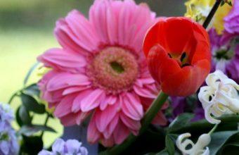 Tulips Gerberas Lucius Basket 1080x2460 340x220