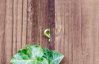 Walls Fences Boards Leaves Plants 1080x2460 340x220