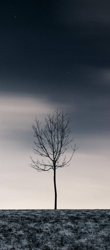 Winter Tree Sky 1080x2460 380x866