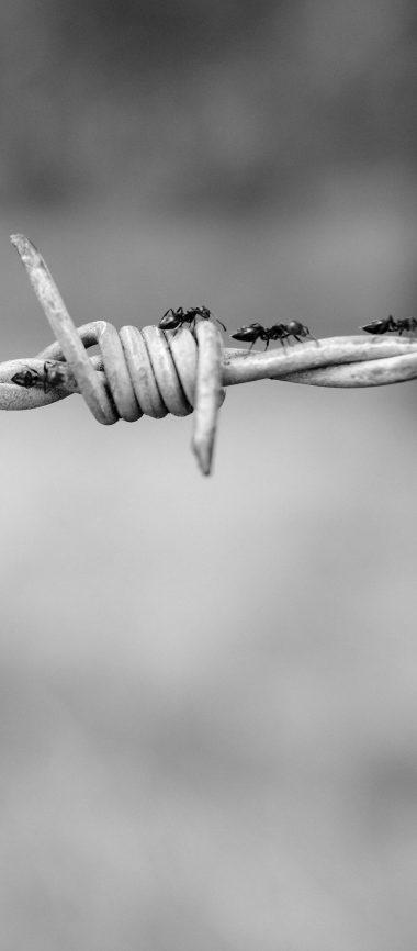 Wire Netting Ants Bw 1080x2460 380x866