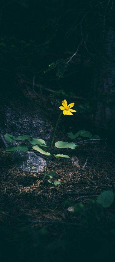 Yellow Flower Grass 1080x2460 380x866