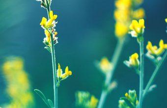 Yellow Flowers Blur 1080x2460 340x220