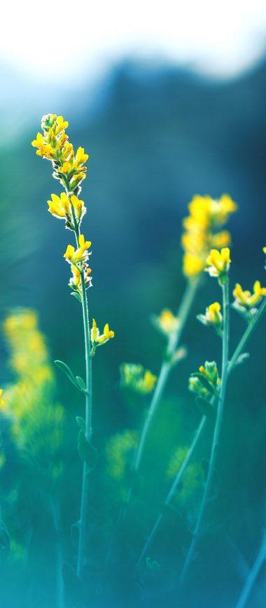 Yellow Flowers Blur 1080x2460 380x866