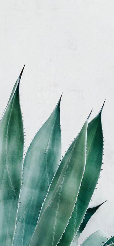 Aloe Succulent Plant Wallpaper 720x1544 380x815